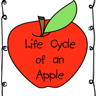 Life Cycle of an Apple Printables and Activities