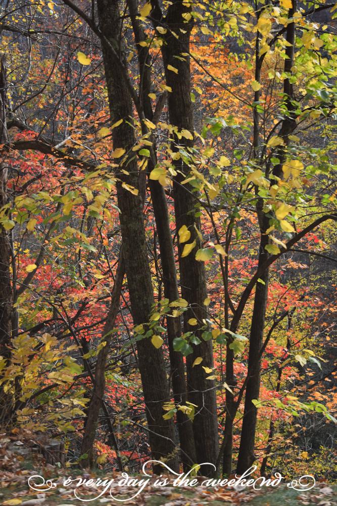Smoky Mountains National Park l Destination: Pigeon Forge, TN